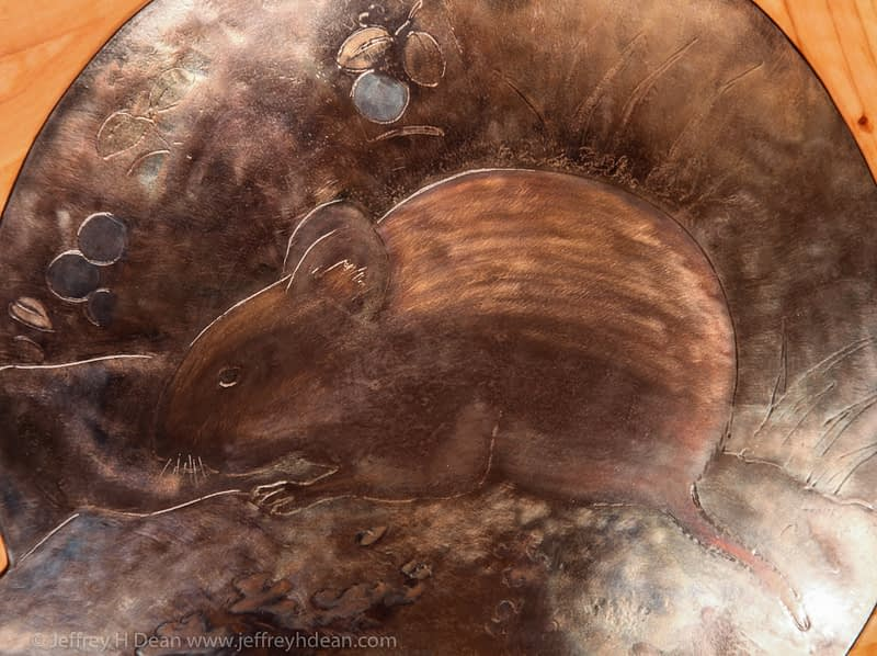 Detail of red back vole.
