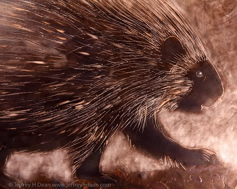 Detail of porcupine.