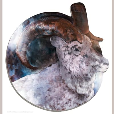 Creative edge metal print of Dall sheep from Through Your Spotting Scope steel engraving
